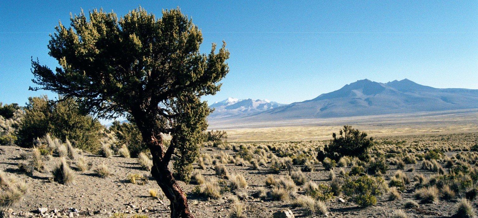 trekking bolivien