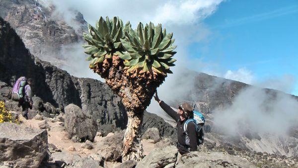 Kilimanjaro für Experten