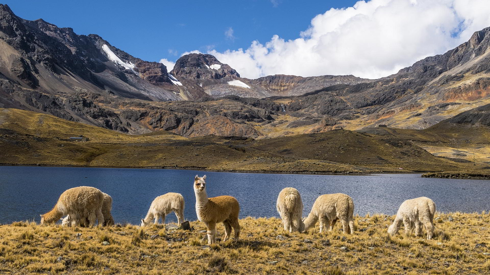 Bolivien Chile Trekking - Condoriri