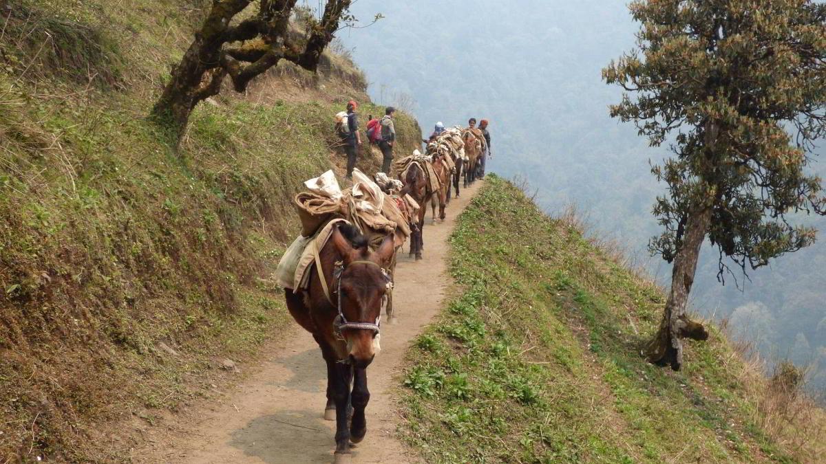 Nepal Trekking Annapurna BC Maultiere