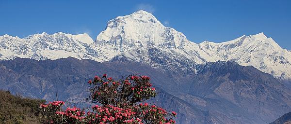 Gipfel des Dhaulagiri
