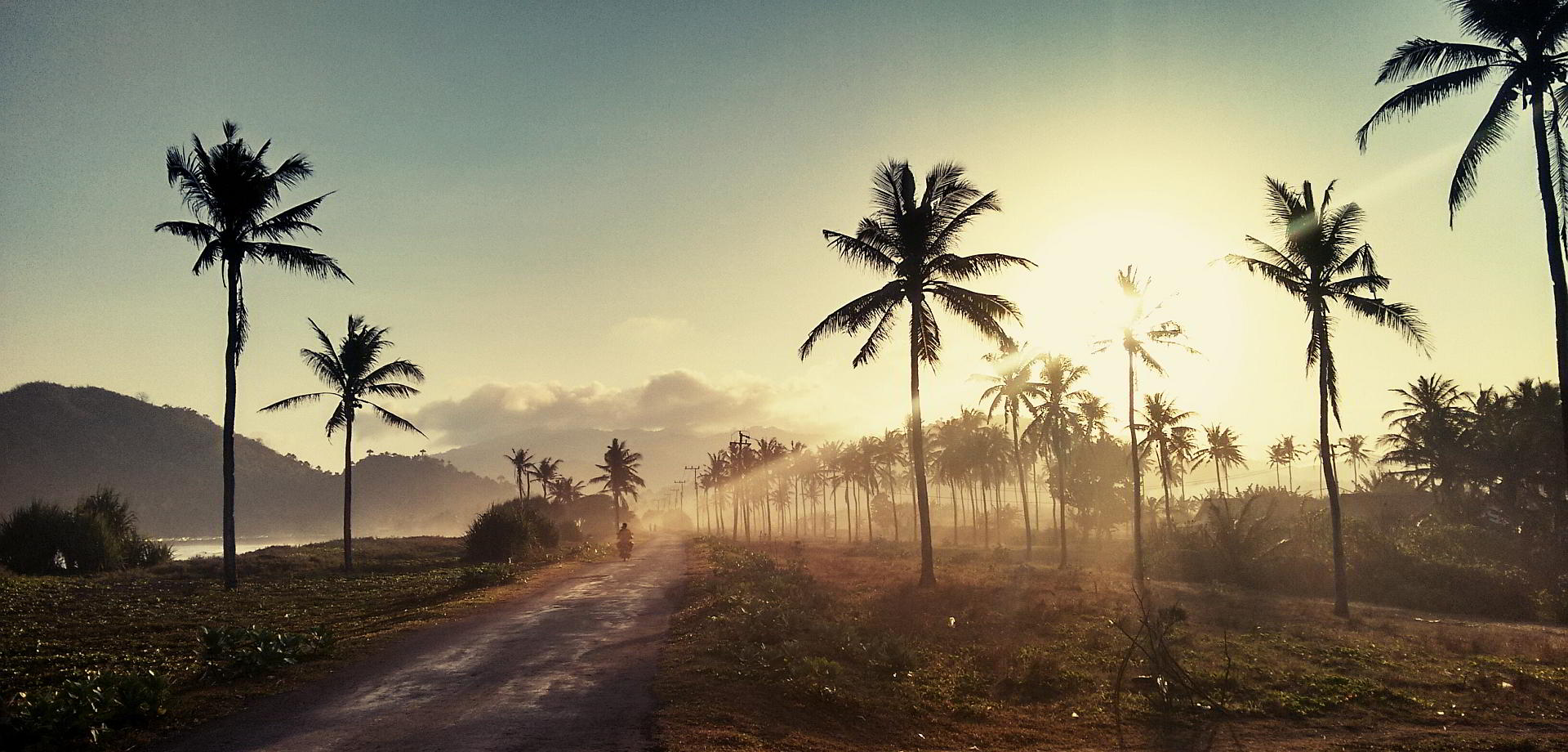 Kokos Plantage auf Java