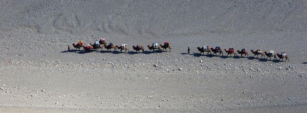 Kamel Trek zum K2 Basecamp