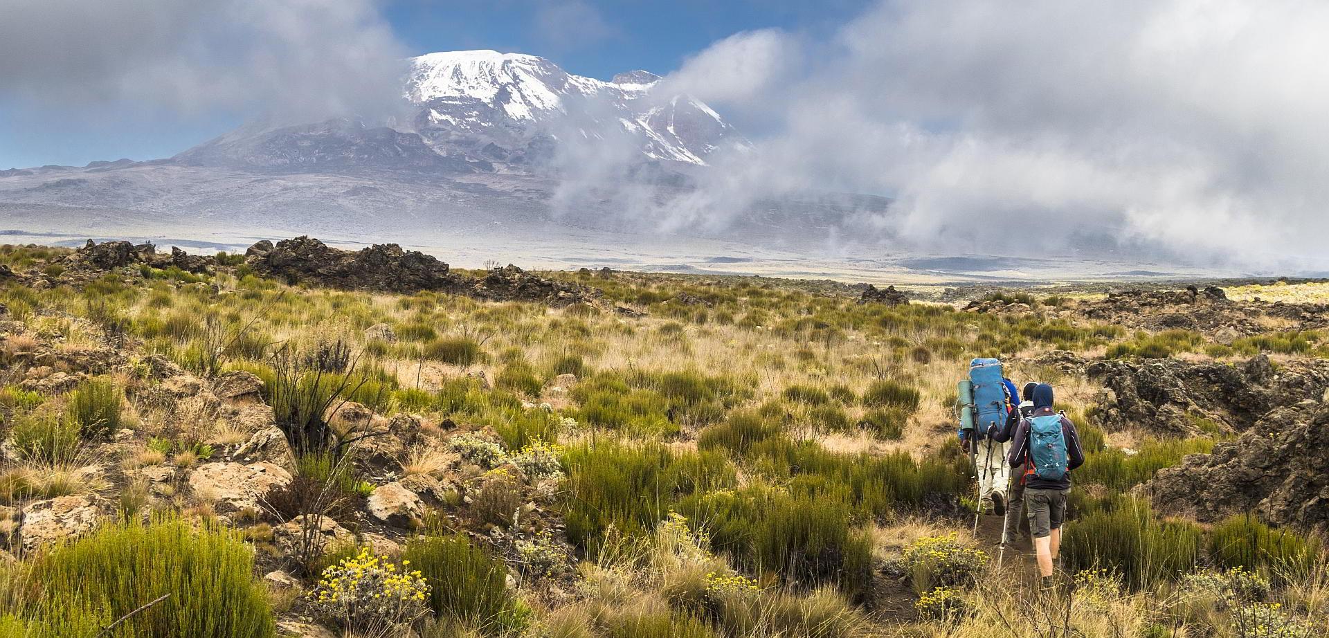 Kilimanjaro Shira-Plateau