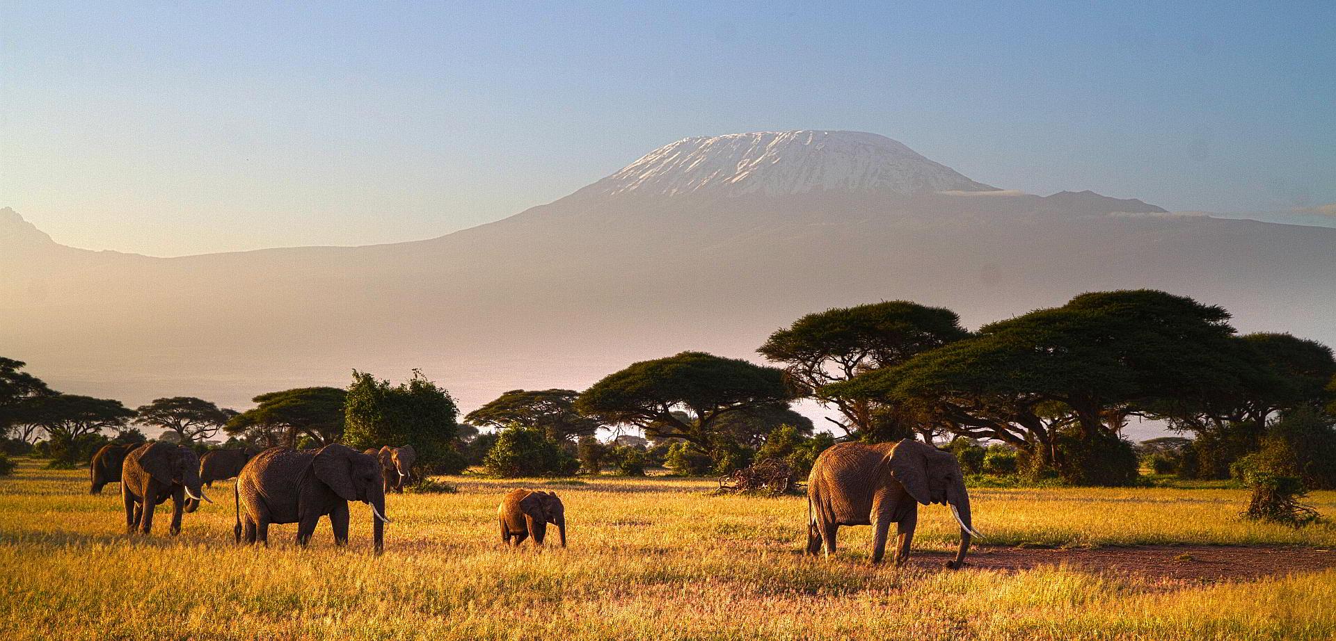 Savanne und Kilimanjaro