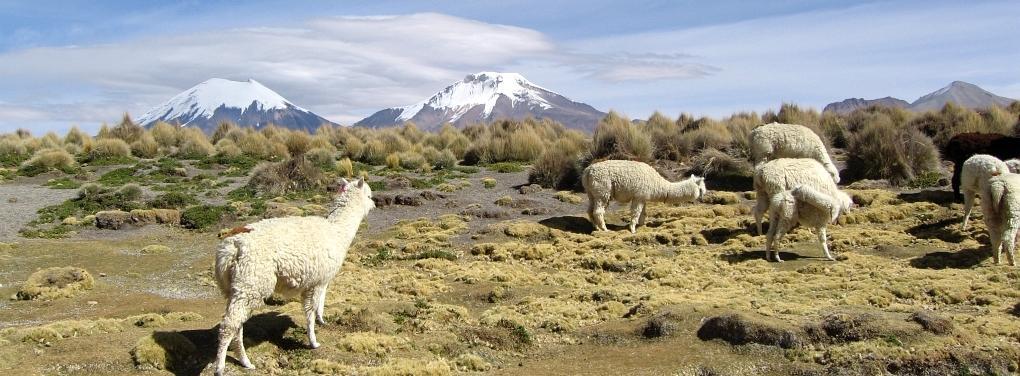 Cerro Parinacota 6.348 m