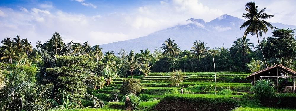 Lombok_Reisfeld_Senaru-1