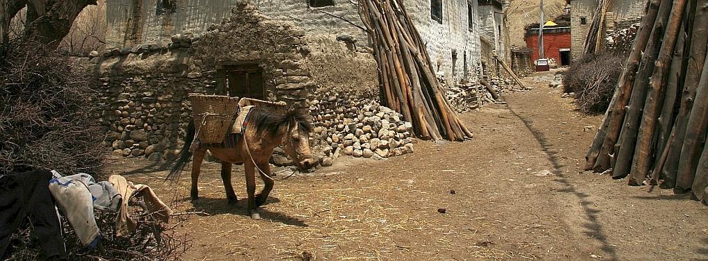 Nepal Muli