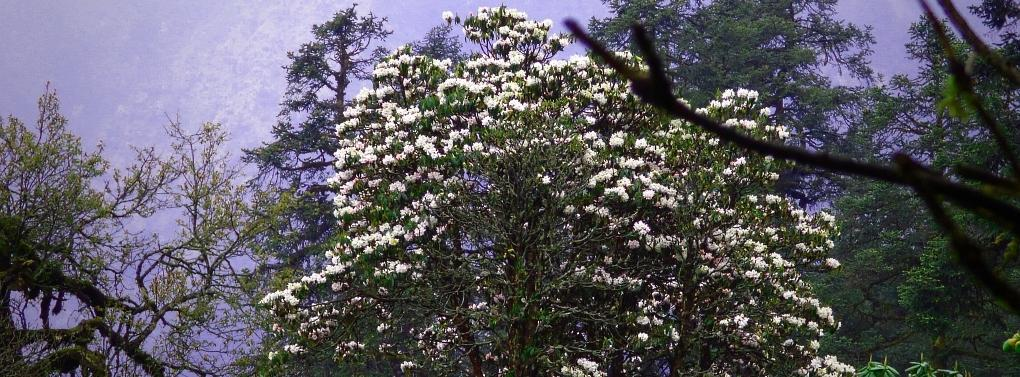 Rhododendronwald-1