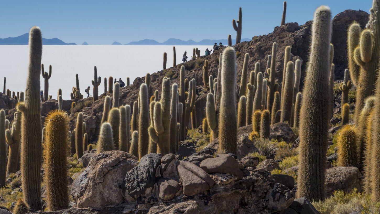 Traumberge Boliviens