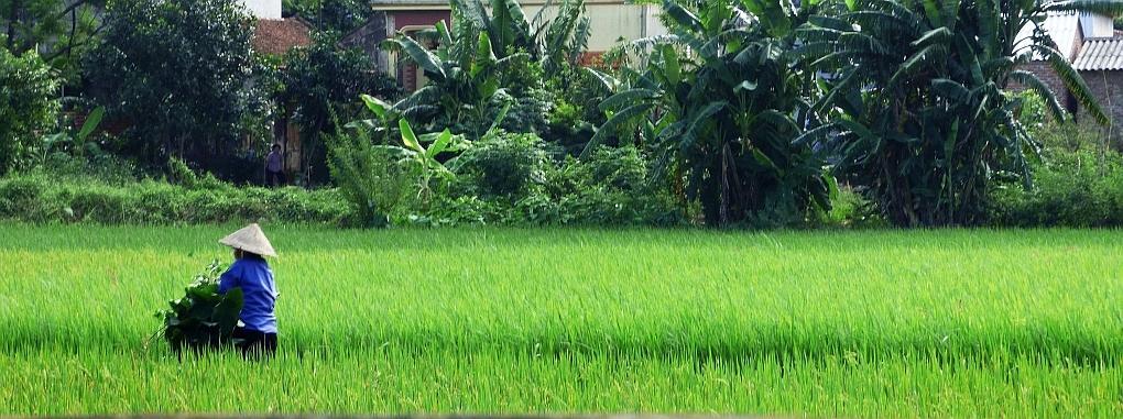 Vietnam Feld