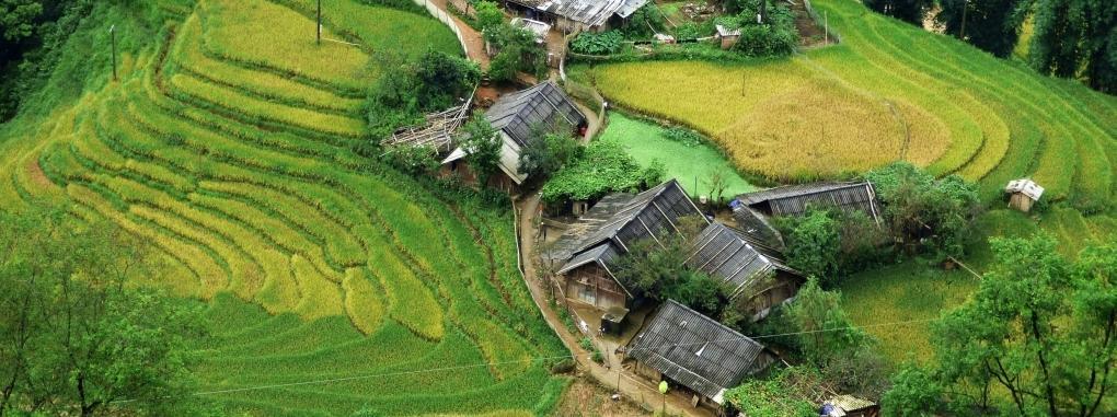 Vietnam Dorf Reisfeld
